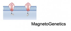 MagnetoGenetics